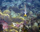 belitong underwater-2
