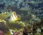 belitong underwater-3