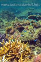 soft corals @ samalona island