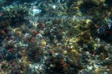 fishes & @ Kambing island