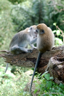 monkeys at Sianok Canyon