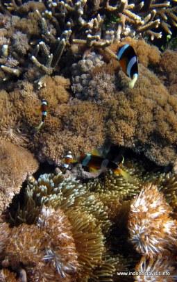 underwater primadona