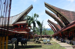 Semi permanent Tongkonan for the guests, Rambu Solok, 2014-Dec