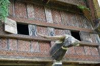 buffalo head on a Tongkonan Buntu Pune wall