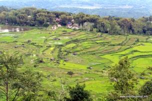 view from Batutumonga